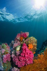 Le corail blanchit!