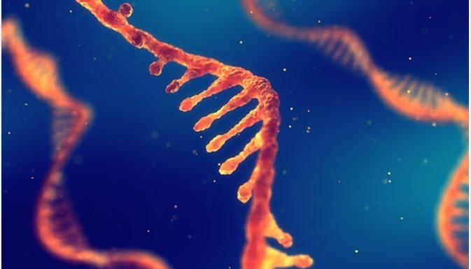 Tout ce qui ne tue pas rend plus fort: l'ARNm